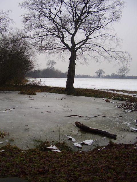 Froze Shaw wood pond.