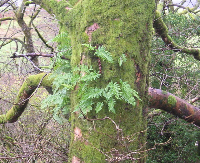 Fern and moss growing on tree
