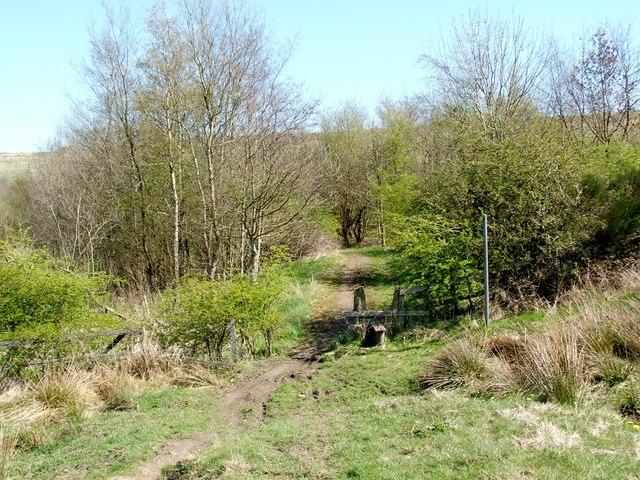 Entering Balmuildy Wood