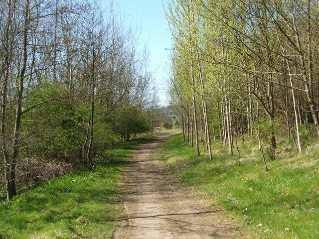 The Kelvin Walkway in Balmuildy Wood