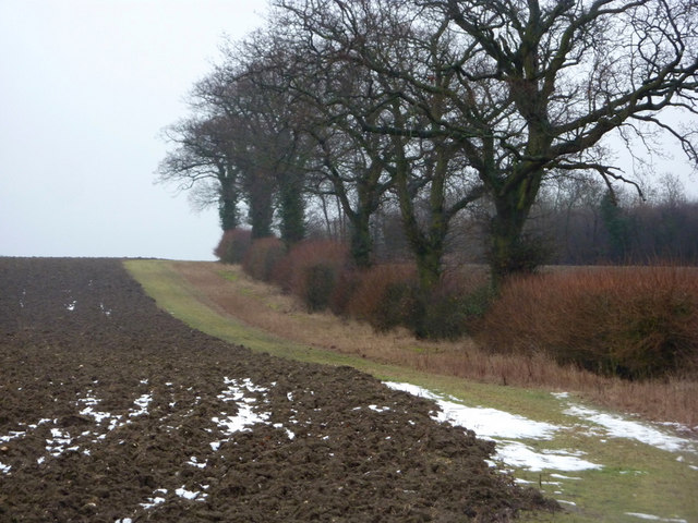 Line of trees near Bluebell Farm