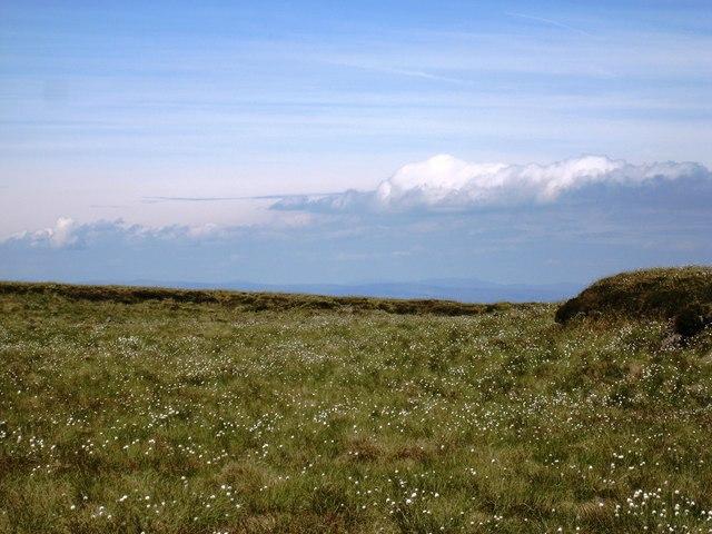 Cotton grass at Scarth of Scaiths