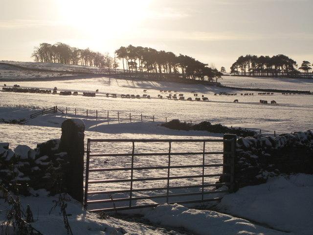 Snowy pastures near Glen Hill Farm