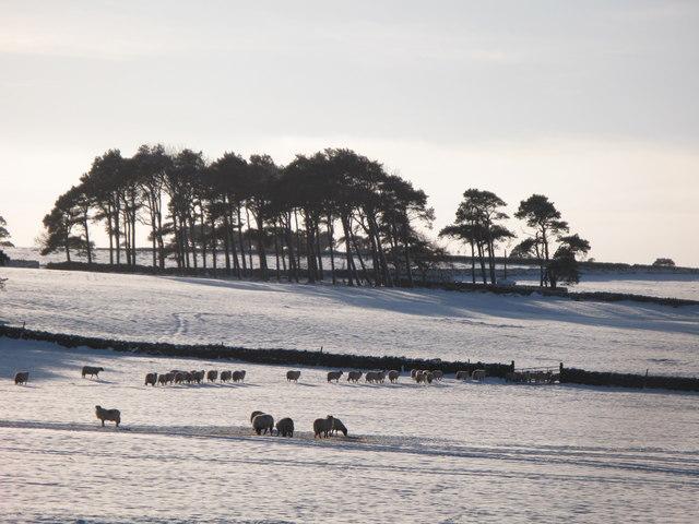 Snowy pastures near Glen Hill Farm (2)