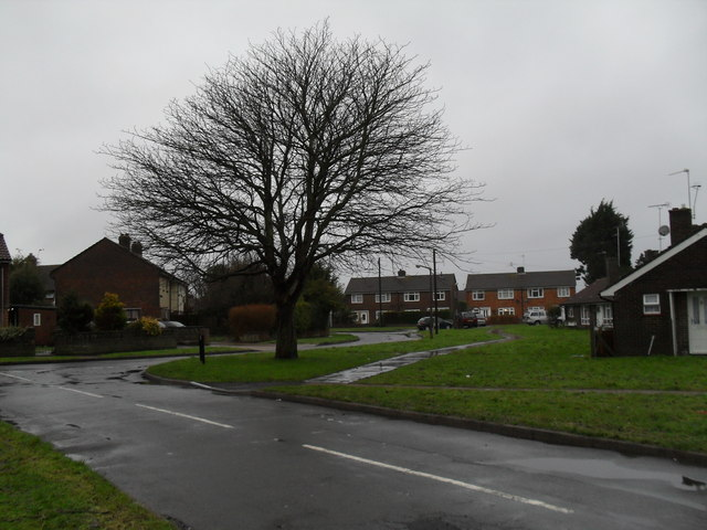 Winter tree in Canterbury Road