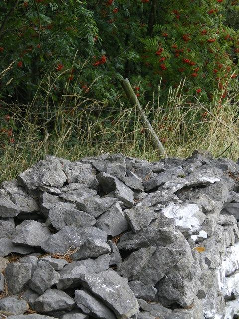 Grey rock red berries - Wensleydale