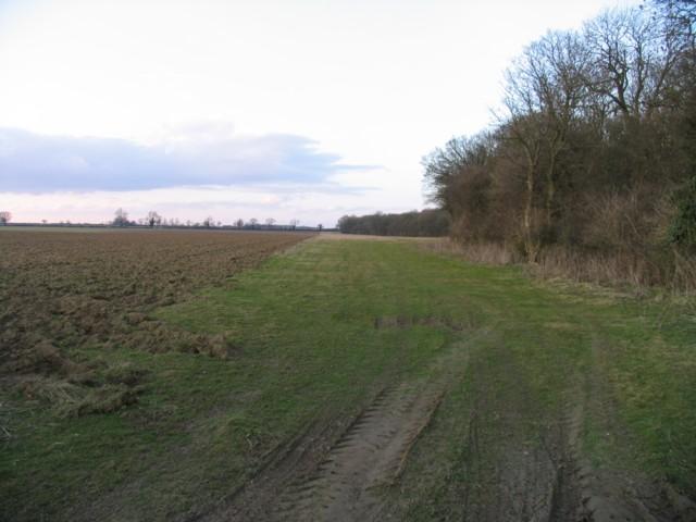 The edge of Greetham Wood Near
