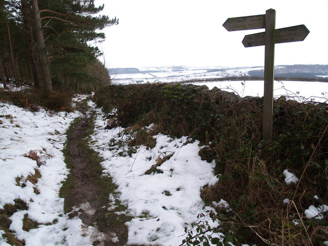 Bridleway Junction on Warden Hill on the edge of Laverick Plantation