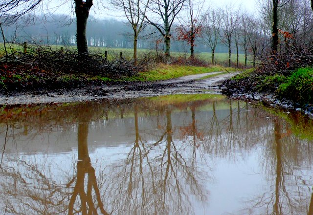 Flooded Track , Lower Whatcombe