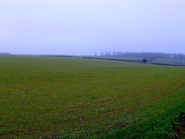 Pasture Field near Longthorns