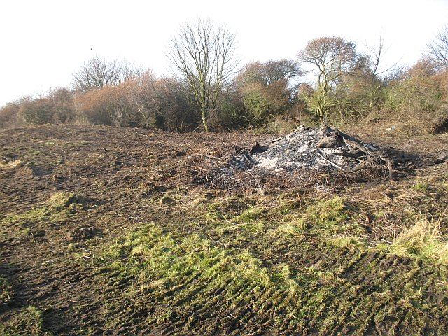 Buckthorn clearance, Longniddry Bents