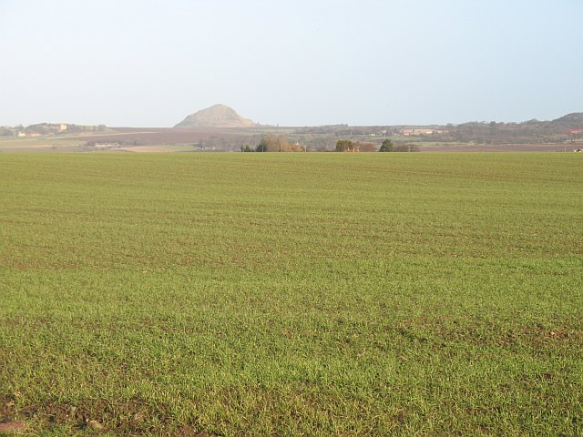 Winter arable crops, West Fortune
