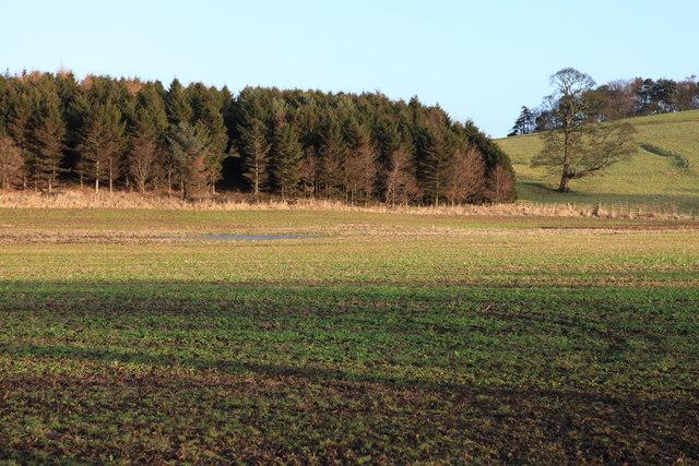 Woodland on Dalmeny Estate