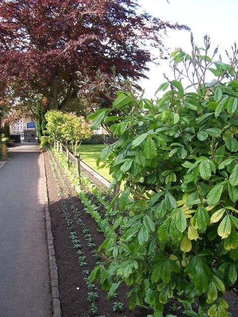 How does your garden grow?, Bath Gardens, Bakewell