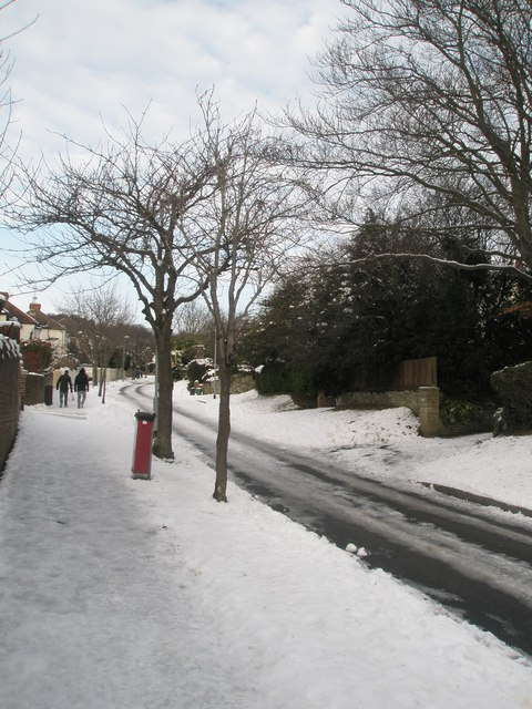 Winter trees in East Cosham Road
