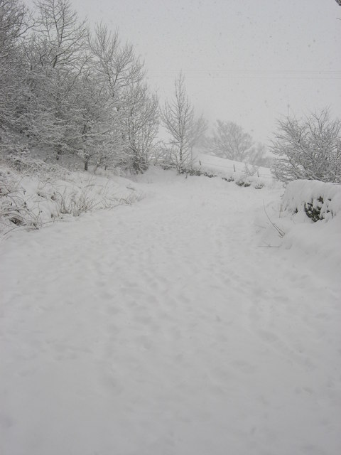 Lonkley Bank in the snow (4)