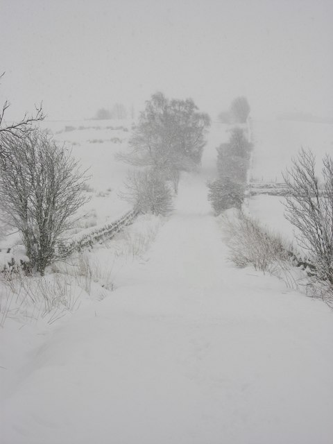The bank above Lonkley Head in the snow