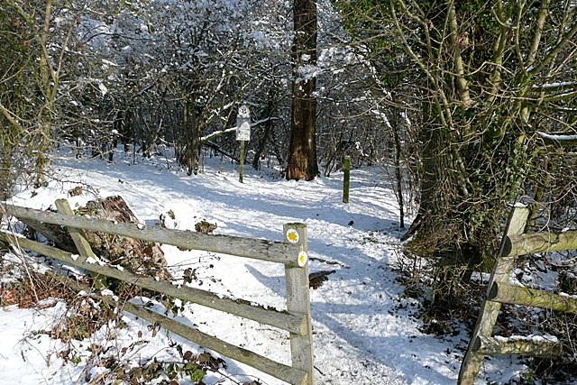 Path into Morgaston Wood