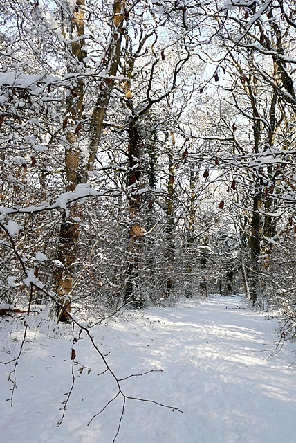 Path in Morgaston Wood