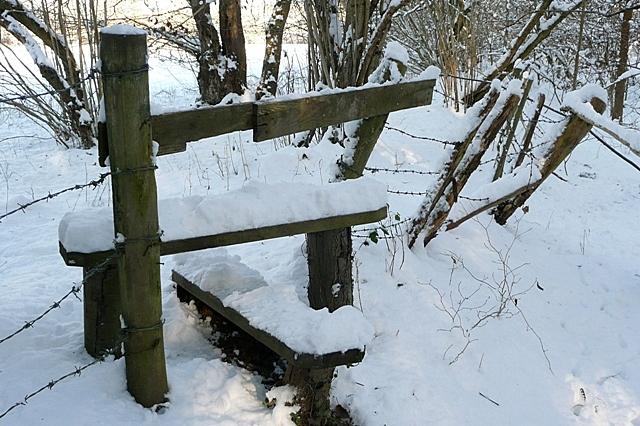 North of Morgaston Wood