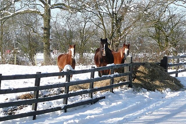Paddocks at Pamber Farm