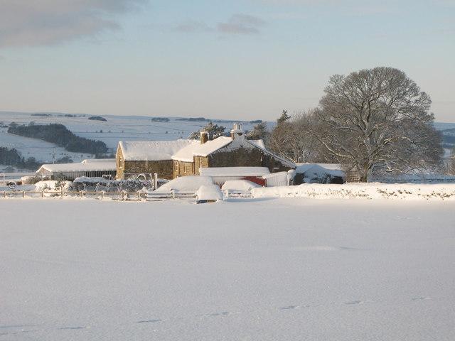 Snowy pastures near High Scotch Hall (2)