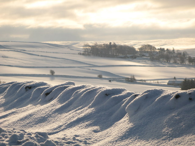 Snowy pastures near Scotch Halls