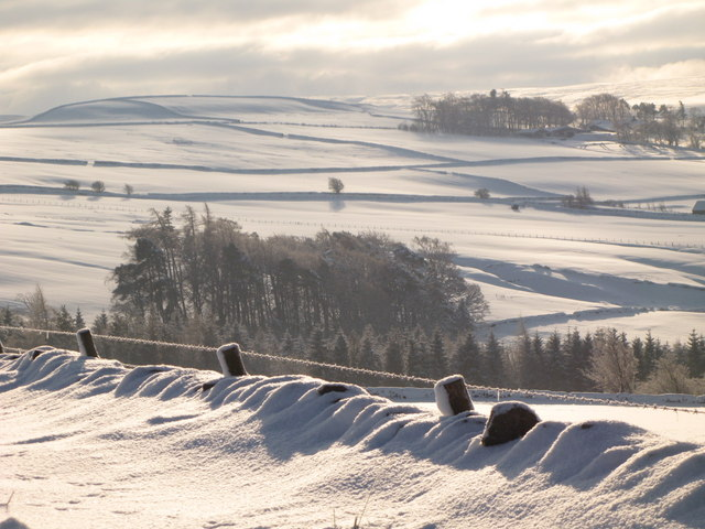 Snowy pastures near Scotch Halls (2)