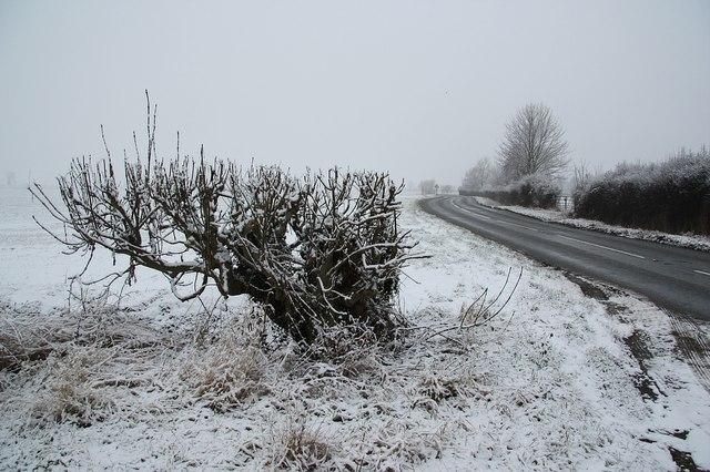 Frozen hedgeline