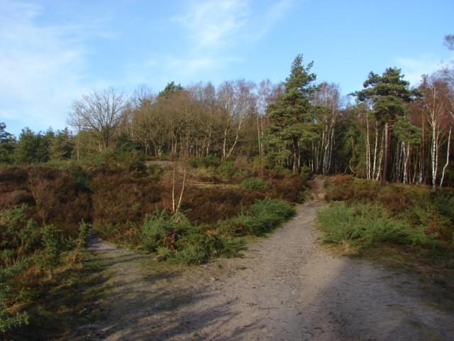 Cuckoo Hill, Brentmoor Common