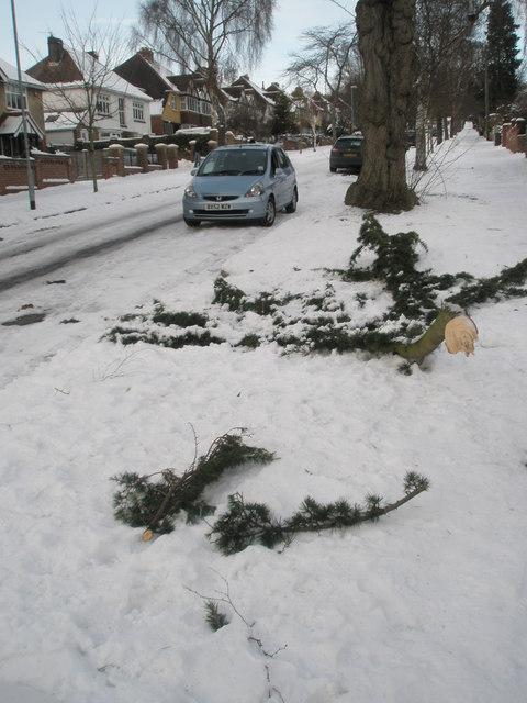 A fallen branch in Carmarthen Avenue