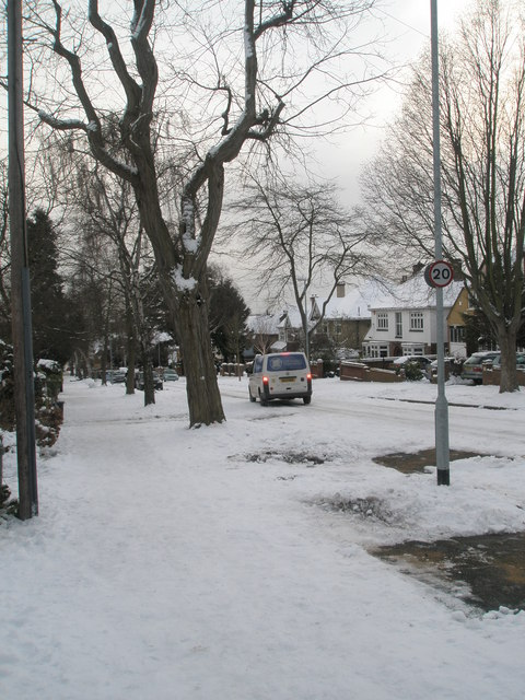 Winter trees in Carmarthen Avenue