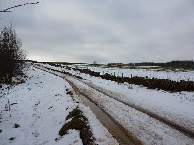 Green Lane in winter
