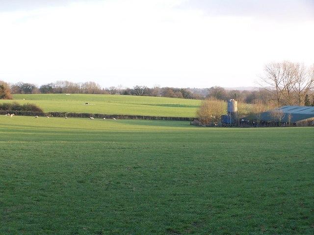Evening shadows, Manor Farm