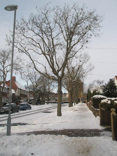 Winter trees in Penarth Avenue