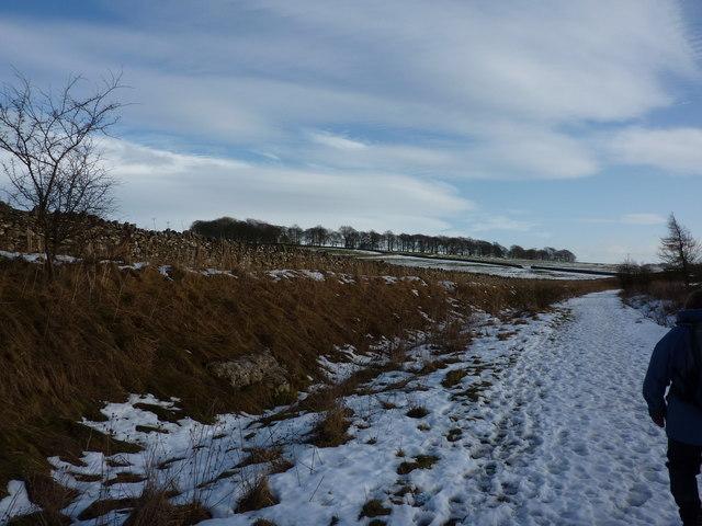 High Peak Trail in the winter, towards Horseshoe Plantation