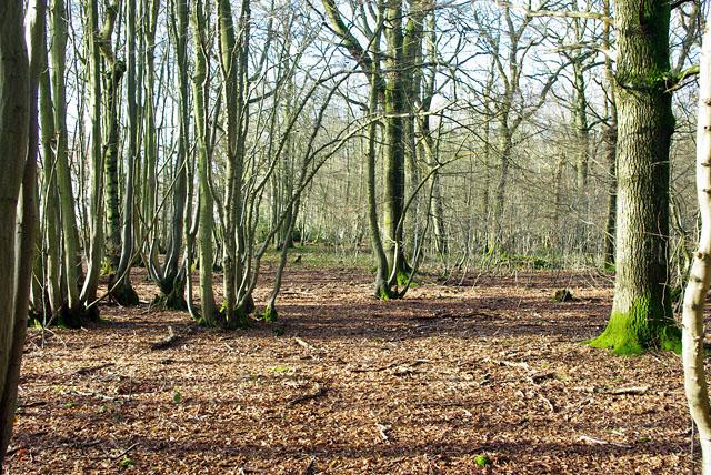 In Cullinghurst Wood