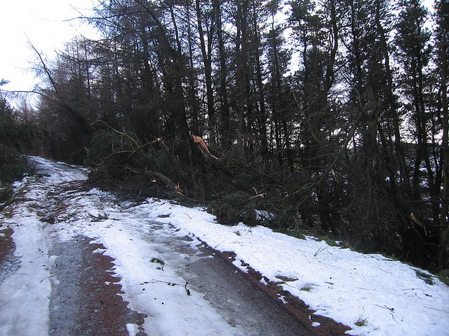 Forestry snow damage