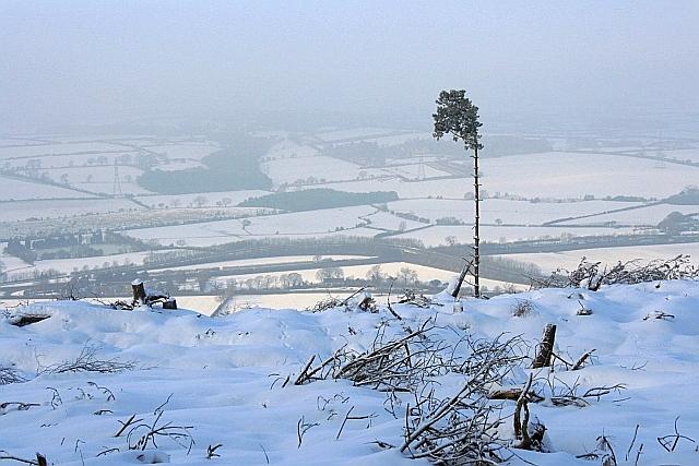 Felled Area, Arncliffe Wood