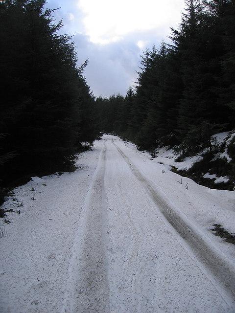Forest track south of Bwlch Rhyd-y-Meirch
