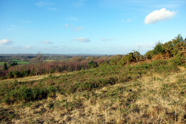 View from Ashdown Forest