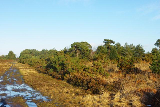 A soggy Ashdown Forest