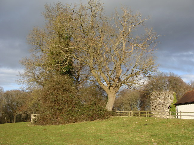 Winter trees, ruin and the edge of the field, Offa's Dyke path