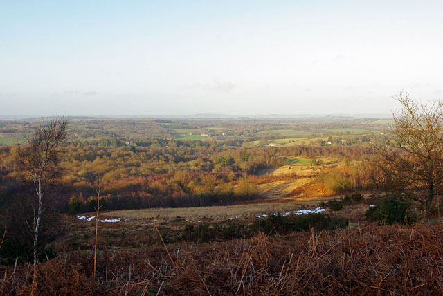 View north from Ashdown Forest