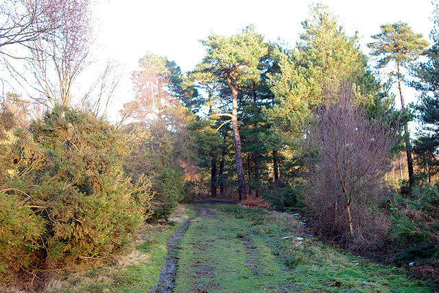 Ashdown Forest track