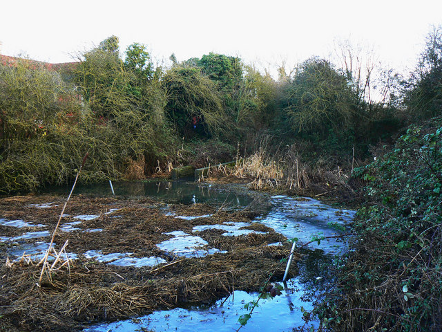 Pond, Cheney Manor Trading Estate, Swindon (5)