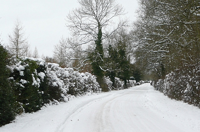 Lane from Stratfield Saye
