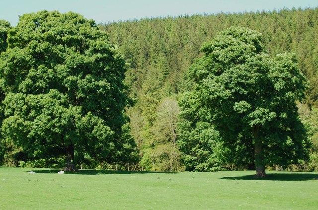 Wonderful parkland trees