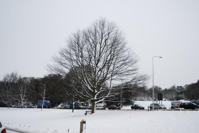 Wintery tree, London Rd