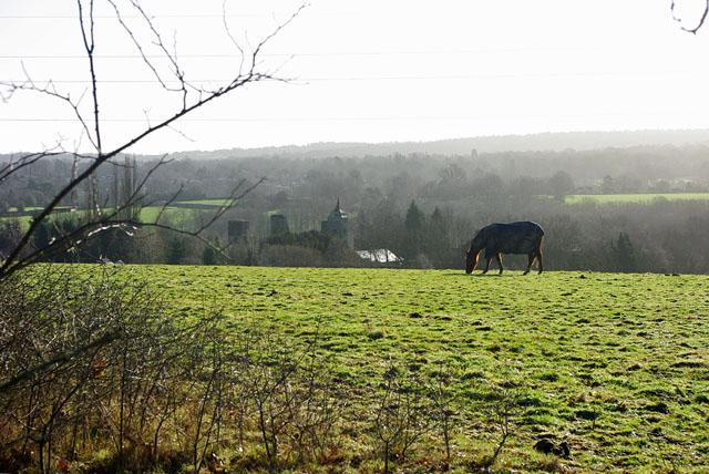 Horse above Brambletye